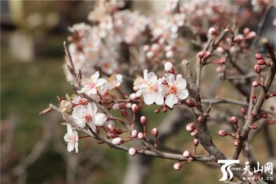 来新疆 赴一场与春日美景的约会
